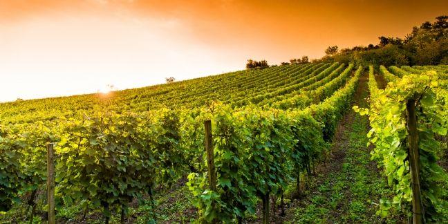 Vente de vin sur Internet : Amazon, site préféré des internautes
