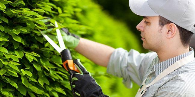 Moneden.fr ambitionne de devenir la marketplace n°1 du jardinage