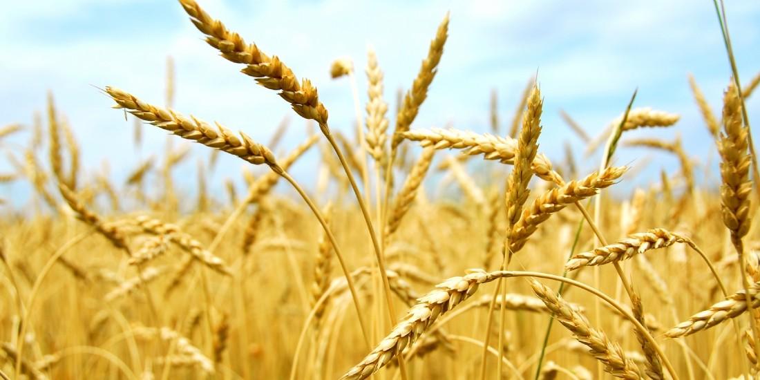 Nestlé étend son Nutri-Score à cinq pays européens